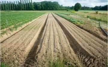 Le premier manifeste pour la sauvegarde des terres agricoles et du climat
