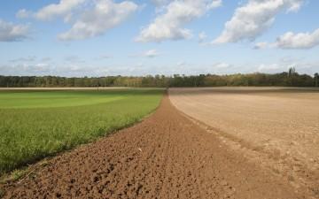 Europacity : contribution de Terre de Liens Ile-de-France au débat public