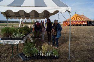 Le stand du Conservaitoire des plantes médicinales de Milly, qui se trouve également sur la plaine.