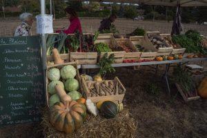 Les légumes cultivés par Cindy et Victor sur la plaine de Milly