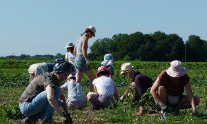 Découverte des plantes aromatiques et médicinales, ferme de Lumigny en Seine-et-Marne