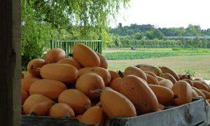 Les Pâtis : une ferme en lien avec l'alimentation de son territoire